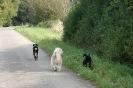 Tierschutzwanderung 2014_11